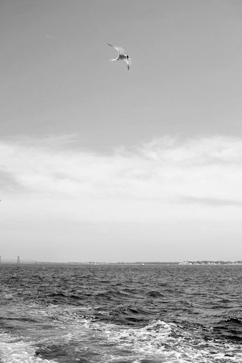 captain steve, sea queen, fluke, fishing